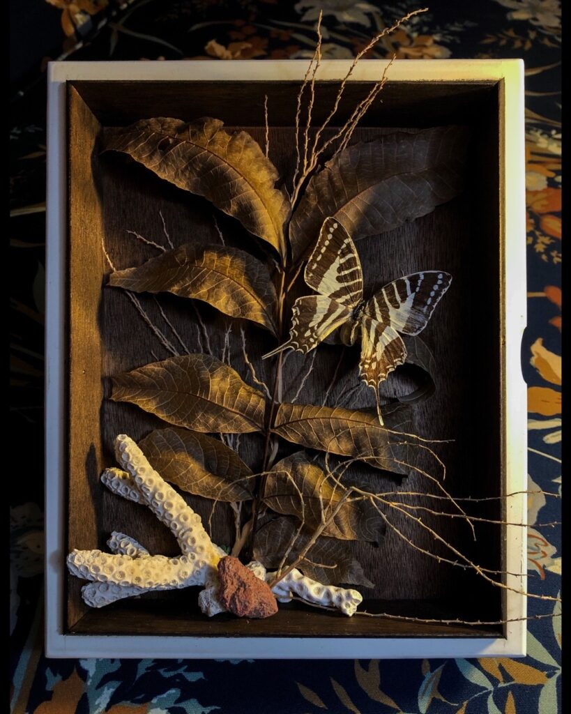 Shadowbox | Found Items {nothing harmed}